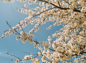 Allergies to pollen: how to protect against them?